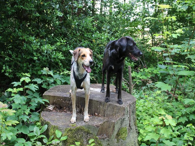 sparziergang mit hund in tecklenburg